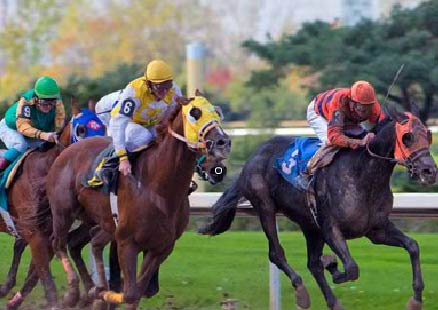 Thoroughbred Horse Racing - Fort Erie Race Track